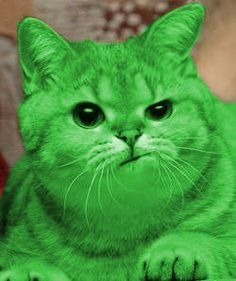 RayCat Annoyed | :) | image tagged in raycat annoyed | made w/ Imgflip meme maker