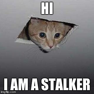 Ceiling Cat | HI I AM A STALKER | image tagged in memes,ceiling cat | made w/ Imgflip meme maker