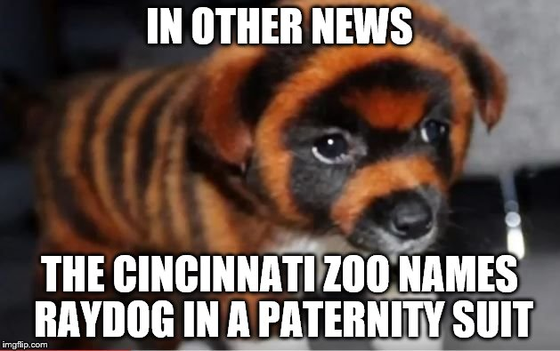Don't worry buddy, I've already opened a GoFundMe legal aid account for you.  | IN OTHER NEWS THE CINCINNATI ZOO NAMES RAYDOG IN A PATERNITY SUIT | image tagged in memes,dog,raydog,puppy | made w/ Imgflip meme maker