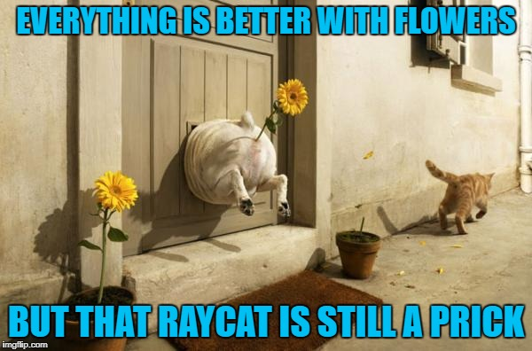 Dogs Vs Cats | EVERYTHING IS BETTER WITH FLOWERS BUT THAT RAYCAT IS STILL A PRICK | image tagged in dog vs cat,memes,raydog,funny,raycat,animals | made w/ Imgflip meme maker