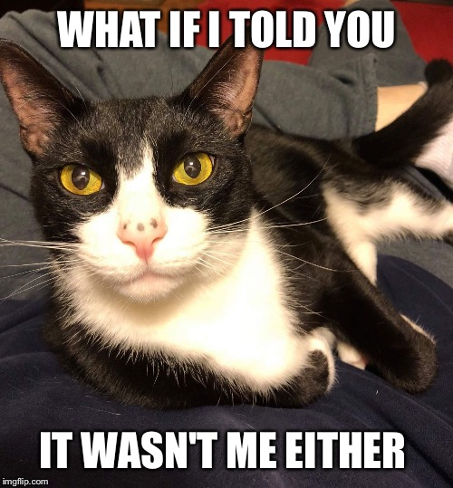 Interesting Cat | WHAT IF I TOLD YOU IT WASN'T ME EITHER | image tagged in interesting cat | made w/ Imgflip meme maker