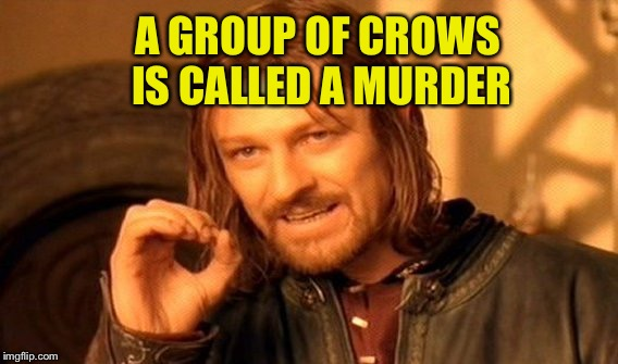 One Does Not Simply Meme | A GROUP OF CROWS IS CALLED A MURDER | image tagged in memes,one does not simply | made w/ Imgflip meme maker