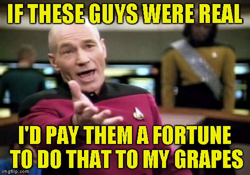 Picard Wtf Meme | IF THESE GUYS WERE REAL I'D PAY THEM A FORTUNE TO DO THAT TO MY GRAPES | image tagged in memes,picard wtf | made w/ Imgflip meme maker