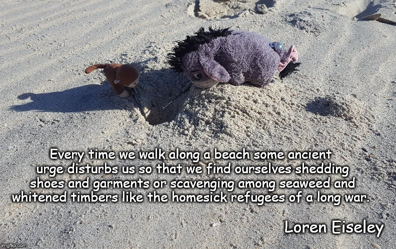 Mystery on the Beach | Every time we walk along a beach some ancient urge disturbs us so that we find ourselves shedding shoes and garments or scavenging among sea | image tagged in beach | made w/ Imgflip meme maker