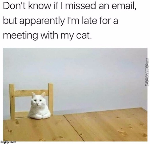 The Cat's Very Disappointed In You! | image tagged in funny,memes | made w/ Imgflip meme maker