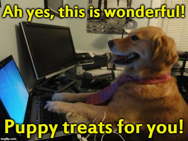 Dog behind a computer | Ah yes, this is wonderful! Puppy treats for you! | image tagged in dog behind a computer | made w/ Imgflip meme maker