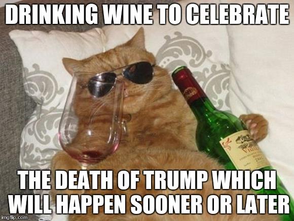 Funny Cat Drinking Meme : Funny cat birthday latest memes imgflip