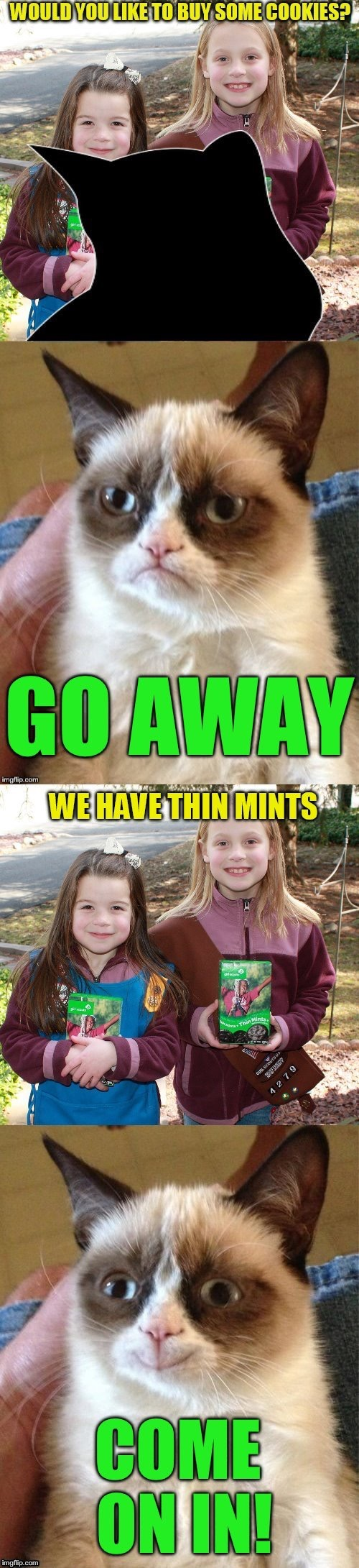 Just in time for Girl Scouts Cookies season! Thanks to DashHopes for the meme on NeedAMeme Stream! | image tagged in memes,grumpy cat,girl scout cookies,thin mints,dashhopes,needameme | made w/ Imgflip meme maker