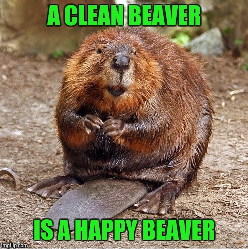 A CLEAN BEAVER IS A HAPPY BEAVER | made w/ Imgflip meme maker