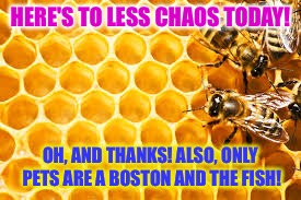 HERE'S TO LESS CHAOS TODAY! OH, AND THANKS! ALSO, ONLY PETS ARE A BOSTON AND THE FISH! | made w/ Imgflip meme maker