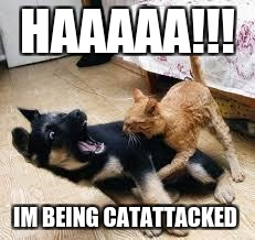 Cat Dog Fight | HAAAAA!!! IM BEING CATATTACKED | image tagged in cat dog fight | made w/ Imgflip meme maker