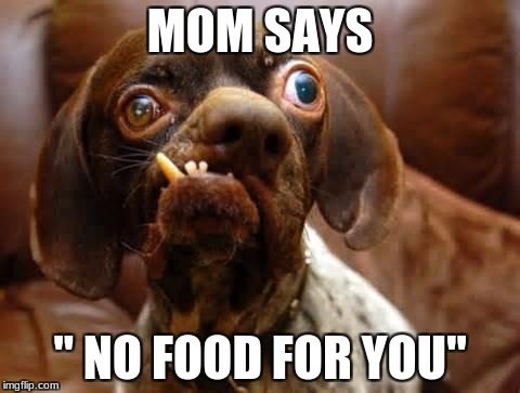 "UGLY DOG | MOM SAYS "" NO FOOD FOR YOU"" 