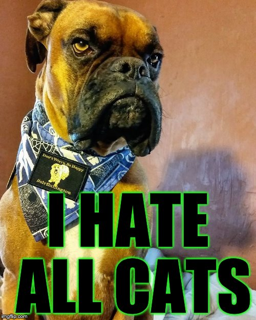 Grumpy Dog | I HATE ALL CATS | image tagged in grumpy dog | made w/ Imgflip meme maker