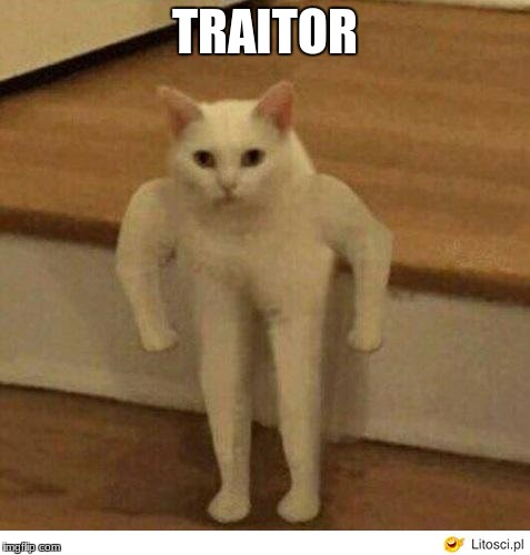 Buff Half Cat | TRAITOR | image tagged in buff half cat | made w/ Imgflip meme maker
