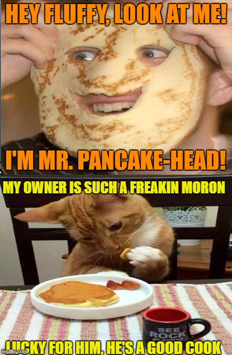 Pancake cat | HEY FLUFFY, LOOK AT ME! I'M MR. PANCAKE-HEAD! MY OWNER IS SUCH A FREAKIN MORON LUCKY FOR HIM, HE'S A GOOD COOK | image tagged in funny memes,cat,pancakes | made w/ Imgflip meme maker