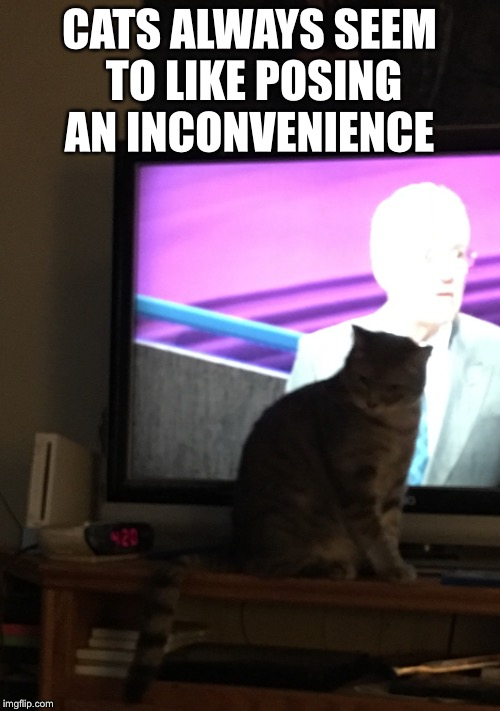 Cats and Television  | CATS ALWAYS SEEM TO LIKE POSING AN INCONVENIENCE | image tagged in computers/electronics,cats | made w/ Imgflip meme maker