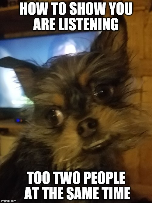 Listen to Dave | HOW TO SHOW YOU ARE LISTENING TOO TWO PEOPLE AT THE SAME TIME | image tagged in funny dogs,dogs | made w/ Imgflip meme maker