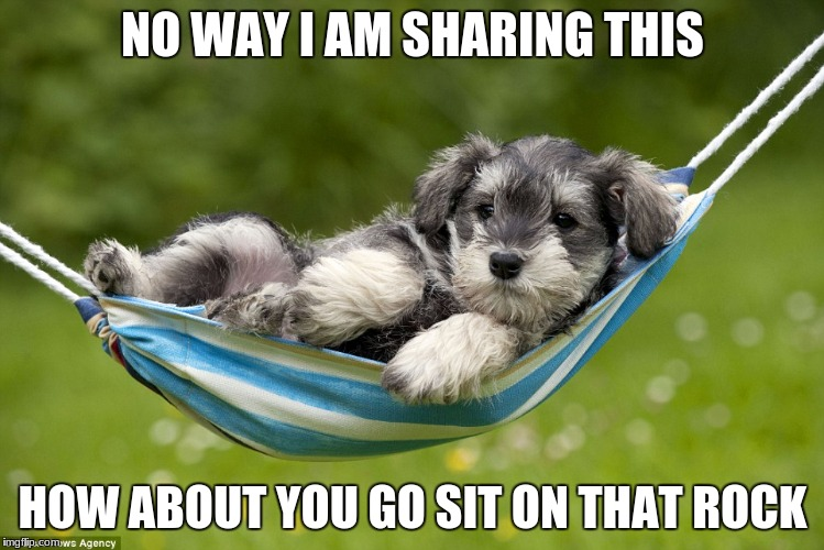 Funny Puppy Memes Memes Gifs Imgflip