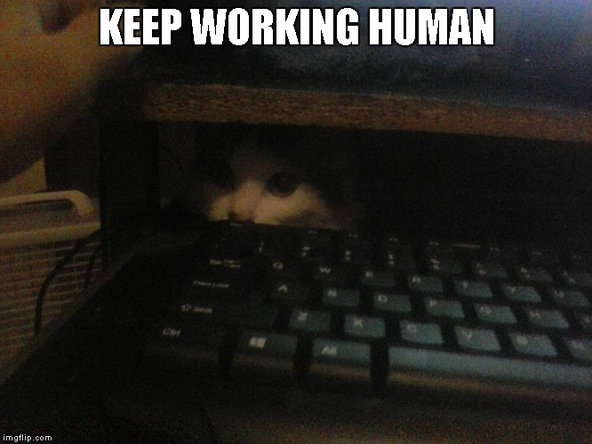 Queen Little Bit | KEEP WORKING HUMAN | image tagged in cat,dwarf cat,funny | made w/ Imgflip meme maker
