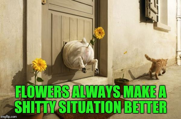 Dog Vs Cat | FLOWERS ALWAYS MAKE A SHITTY SITUATION BETTER | image tagged in dog vs cat | made w/ Imgflip meme maker