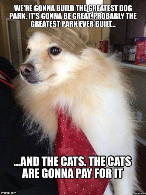 A | image tagged in dogs,cats,donald trump | made w/ Imgflip meme maker