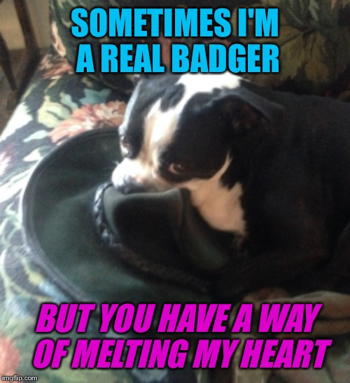 SOMETIMES I'M A REAL BADGER BUT YOU HAVE A WAY OF MELTING MY HEART | made w/ Imgflip meme maker