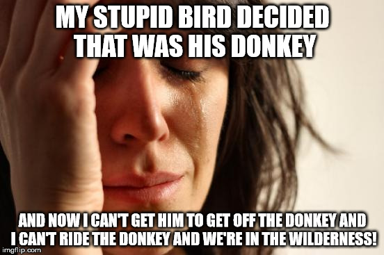 First World Problems Meme | MY STUPID BIRD DECIDED THAT WAS HIS DONKEY AND NOW I CAN'T GET HIM TO GET OFF THE DONKEY AND I CAN'T RIDE THE DONKEY AND WE'RE IN THE WILDER | image tagged in memes,first world problems | made w/ Imgflip meme maker