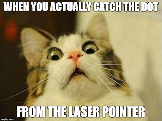 Scared Cat | WHEN YOU ACTUALLY CATCH THE DOT FROM THE LASER POINTER | image tagged in memes,scared cat | made w/ Imgflip meme maker