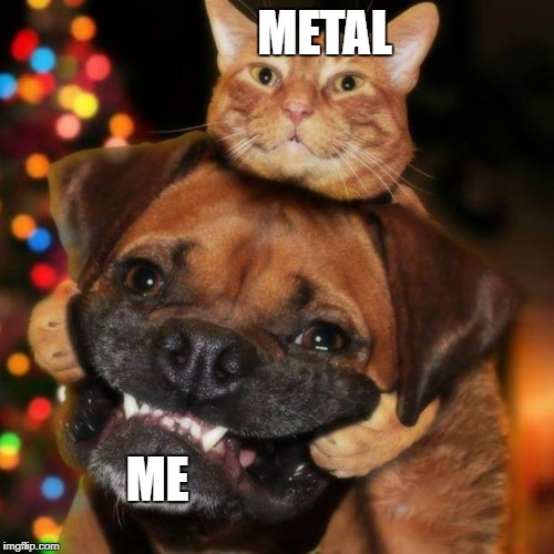 dogs an cats | METAL ME | image tagged in dogs an cats | made w/ Imgflip meme maker