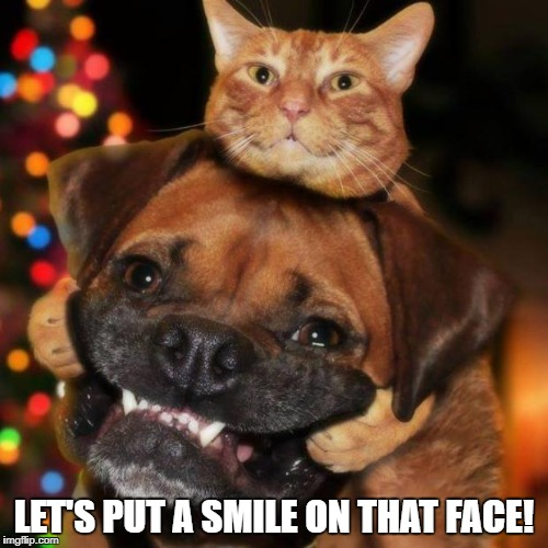 dogs an cats | LET'S PUT A SMILE ON THAT FACE! | image tagged in dogs an cats | made w/ Imgflip meme maker
