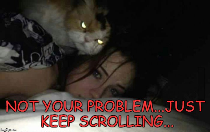 Always keep your cat happy!!! | NOT YOUR PROBLEM...JUST KEEP SCROLLING... | image tagged in creepy cat,memes,not your problem,funny,cats,animals | made w/ Imgflip meme maker