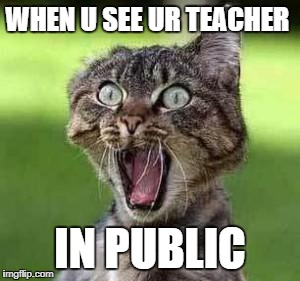 scared cat | WHEN U SEE UR TEACHER IN PUBLIC | image tagged in scared cat | made w/ Imgflip meme maker