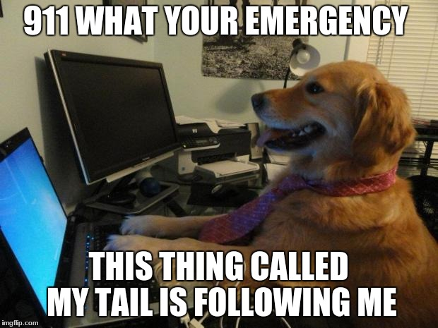 911 WHAT YOUR EMERGENCY THIS THING CALLED MY TAIL IS FOLLOWING ME | image tagged in no idea dog high resolution | made w/ Imgflip meme maker