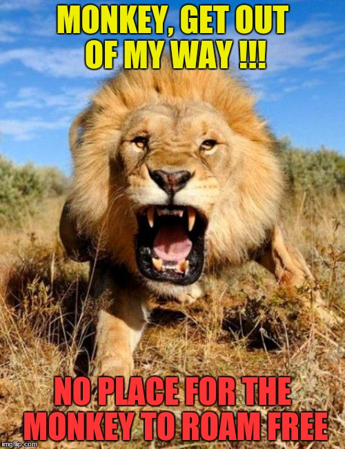 lion | MONKEY, GET OUT OF MY WAY !!! NO PLACE FOR THE MONKEY TO ROAM FREE | image tagged in lion | made w/ Imgflip meme maker