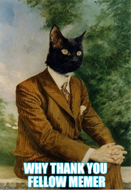 cat in a suit | WHY THANK YOU FELLOW MEMER | image tagged in cat in a suit | made w/ Imgflip meme maker