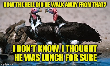 HOW THE HELL DID HE WALK AWAY FROM THAT? I DON'T KNOW, I THOUGHT HE WAS LUNCH FOR SURE | made w/ Imgflip meme maker