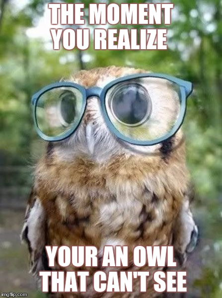 wow | THE MOMENT YOU REALIZE YOUR AN OWL THAT CAN'T SEE | image tagged in the moment you realize | made w/ Imgflip meme maker