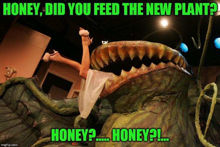HONEY, DID YOU FEED THE NEW PLANT? HONEY?..... HONEY?!... | made w/ Imgflip meme maker