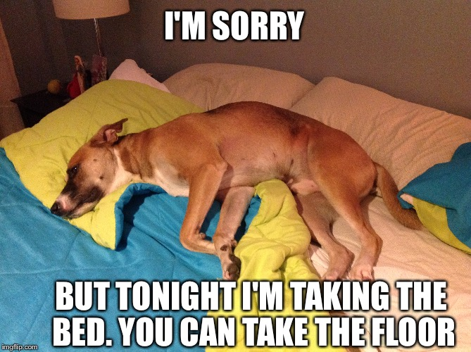 hog dog | I'M SORRY BUT TONIGHT I'M TAKING THE BED. YOU CAN TAKE THE FLOOR | image tagged in dog week | made w/ Imgflip meme maker