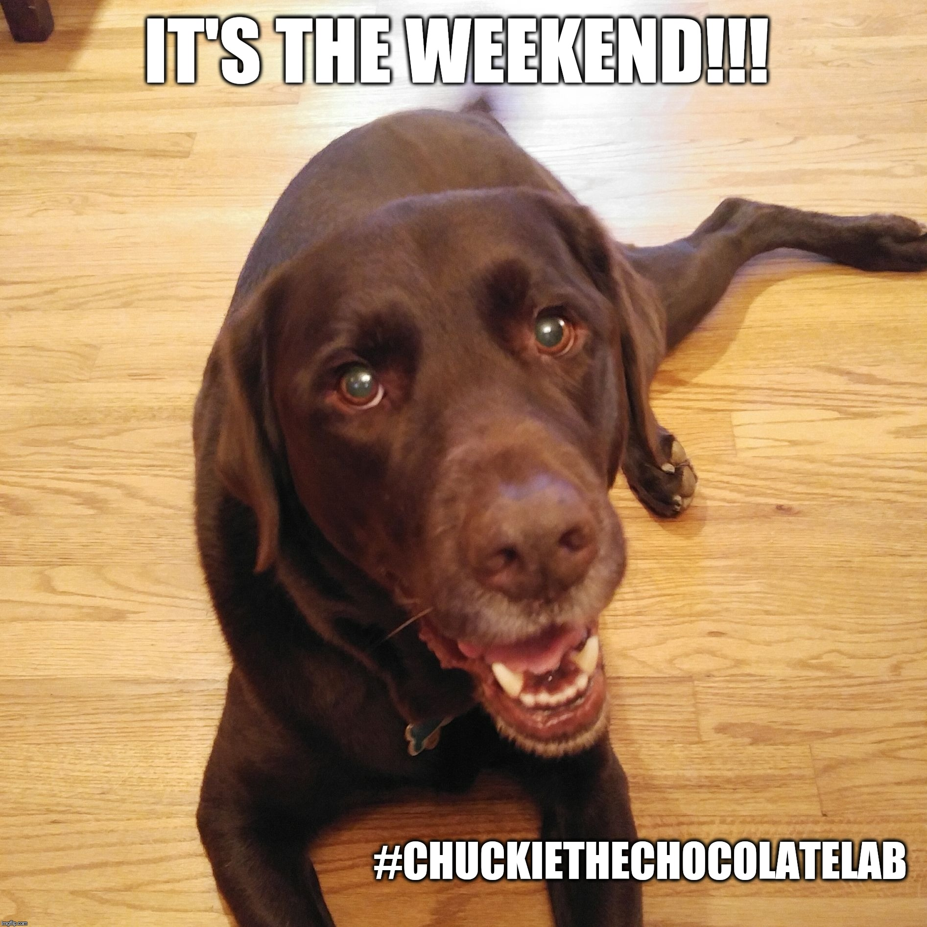 IT'S THE WEEKEND!!! #CHUCKIETHECHOCOLATELAB | image tagged in chuckie the chocolate lab | made w/ Imgflip meme maker