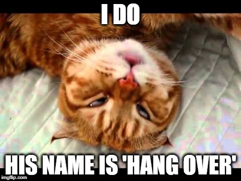 drunk kitty | I DO HIS NAME IS 'HANG OVER' | image tagged in drunk kitty | made w/ Imgflip meme maker