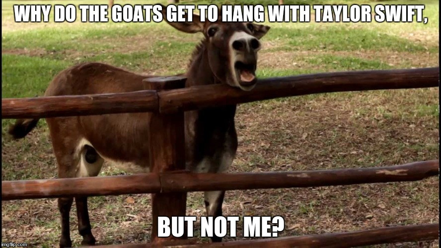 taylor should open her own goat sactuary that will be featured in
