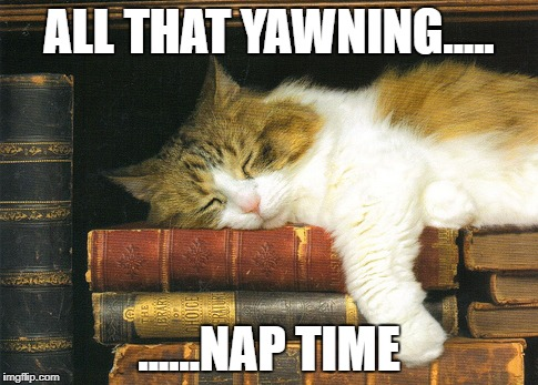 ALL THAT YAWNING..... ......NAP TIME | made w/ Imgflip meme maker