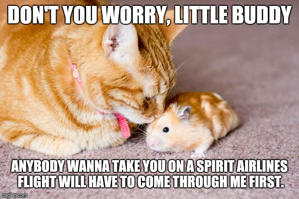 DON'T YOU WORRY, LITTLE BUDDY ANYBODY WANNA TAKE YOU ON A SPIRIT AIRLINES FLIGHT WILL HAVE TO COME THROUGH ME FIRST. | image tagged in don't worry little buddy,spirit airlines,hamster,cute,friends | made w/ Imgflip meme maker