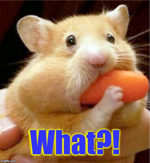Do yourself a favor and don't watch me eat. | What?! | image tagged in hamster carrot,memes,what | made w/ Imgflip meme maker