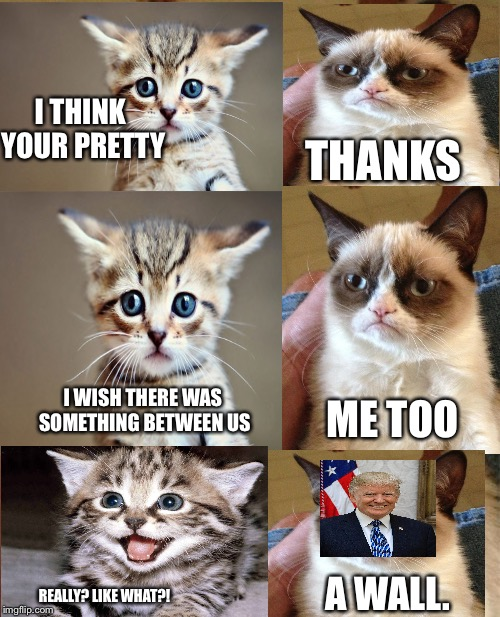 Grumpy Cat |  I THINK YOUR PRETTY; THANKS; I WISH THERE WAS SOMETHING BETWEEN US; ME TOO; A WALL. REALLY? LIKE WHAT?! | image tagged in memes,grumpy cat | made w/ Imgflip meme maker