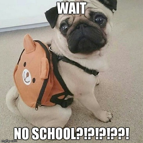 nerdy pug | WAIT NO SCHOOL?!?!?!??! | image tagged in pugs | made w/ Imgflip meme maker