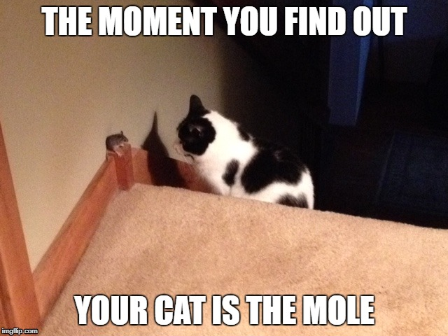 Cat is the Mole | THE MOMENT YOU FIND OUT YOUR CAT IS THE MOLE | image tagged in cat | made w/ Imgflip meme maker