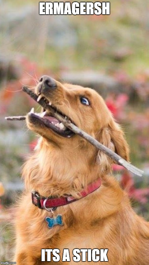 ERMAGERSH ITS A STICK | image tagged in happy dog | made w/ Imgflip meme maker