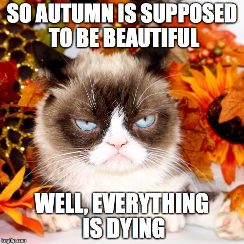 SO AUTUMN IS SUPPOSED TO BE BEAUTIFUL WELL, EVERYTHING IS DYING | image tagged in grumpy cat autumn | made w/ Imgflip meme maker